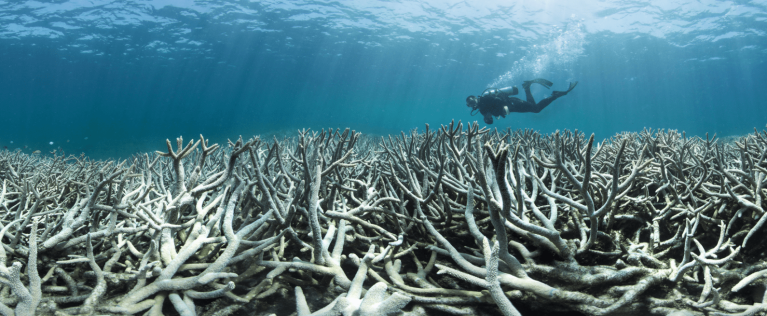 Heron Island Coral Bleaching (Picture via XL Catlin Seaview Survey/Underwater Earth)